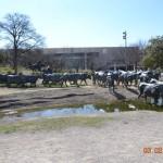 02-28-13 Dallas Officer Training 186